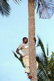 African man, about 25 years old, climbed a palm tree. Zanzibar, Tanzania - February 18, 2008: One unknown young African man, approximate age 25-30 years climbed Stock Photo