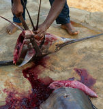 African man cutting the sailfish marlin to clean fish Royalty Free Stock Photography