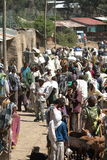 African market of Debark in Ethiopia Royalty Free Stock Photography