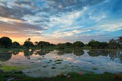 African marshland Royalty Free Stock Photography