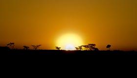 African Masai Mara at Sunrise Royalty Free Stock Photo