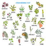 African medicinal plants. Hand drawn vector set of medicinal plants Royalty Free Stock Photography
