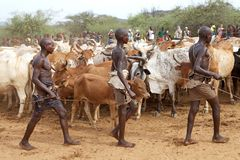 African men and cattle Stock Images