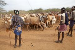 African men and cattle Stock Photos