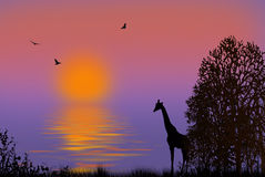 African Morning Royalty Free Stock Photo