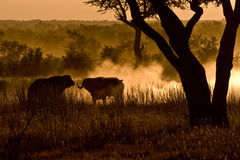 African morning Royalty Free Stock Photography