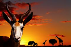 African nature concept Stock Photo