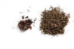African Night Crawler, earthworms and Fertile soil isolated on white background. African Night Crawler Eudrilus eugeniae, earthworms  and Fertile soil isolated royalty free stock photos