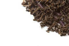 African Night Crawler, earthworms and Fertile soil isolated on white background. African Night Crawler Eudrilus eugeniae, earthworms  and Fertile soil isolated royalty free stock photo