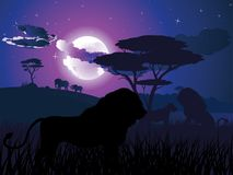 African Night with Lion Stock Photos