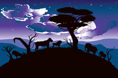 African Night with Lion Royalty Free Stock Photo