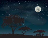 African Night Sky. Two rhinos standing under Acacia trees silhouetted against a starry African sky Royalty Free Stock Image