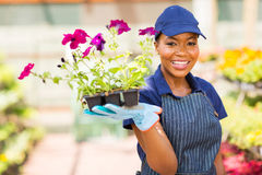 African nursery worker Royalty Free Stock Image