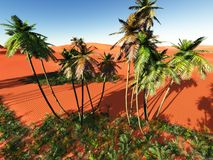 African oasis Royalty Free Stock Photos