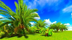 African oasis Stock Photography