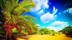 African oasis Royalty Free Stock Photography