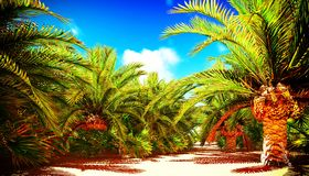 African oasis Royalty Free Stock Photo