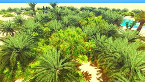 African oasis on Sahara Stock Images