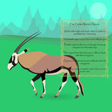 African Oryx Gazella or Gemsbok. Against Symplistic Nature Background and Poster with Few Interesting Facts about this Animal. Educational Card for Childrens Stock Photography