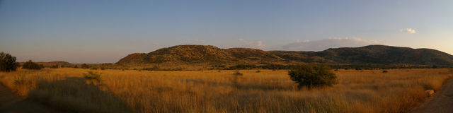 African Panorama. Panorama of the African emptyness of wildlife scenery stock images