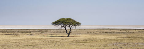 African panorama Stock Images