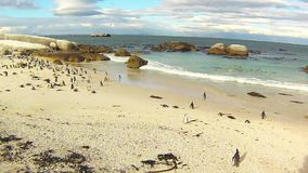 African penguin colony: penguins on the beach under the sun Royalty Free Stock Photos