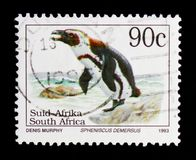 African Penguin Spheniscus demersus, Definitives Endangered Animalsserie, circa 1995 Stock Images