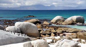 African penguins on Boulders Beach Stock Image