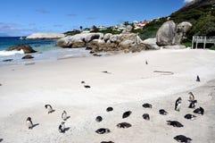 African penguins on Boulders Beach Stock Photos