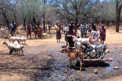African people: Pokot shepherds Royalty Free Stock Photos