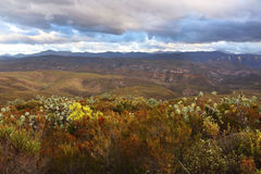 African Plains and Baviaan Mountains. The Baviaan Mountains of South Africa reach up behind the savannah plains Stock Photography