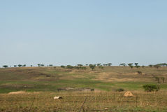 African plains Royalty Free Stock Images