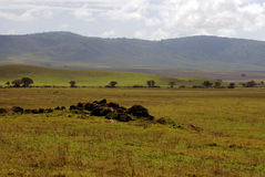 African Plains Stock Photography