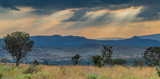 African plains Royalty Free Stock Photo