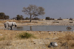 African pool of water Royalty Free Stock Photography
