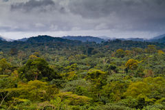 African Rainforest. Landscape of the African Forest in Equatorial Guinea Royalty Free Stock Photography