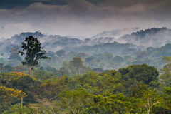African Rainforest. Landscape of the African Forest in Equatorial Guinea Royalty Free Stock Photo