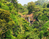 African rainforest. African lush rainforest around high Mamy Wata waterfall, Cameroon nature background Royalty Free Stock Image