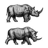 African rhino walking sketch of rhinoceros animal. Rhino walking sketch of african mammal animal. Wild rhinoceros attacking with bended head isolated icon for vector illustration