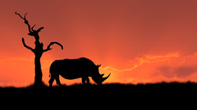 African rhinoceros silhouette Royalty Free Stock Image