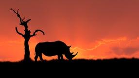 African rhinoceros silhouette. Silhouette of african white rhinoceros against orange dusk dawn sky, tree Royalty Free Stock Image
