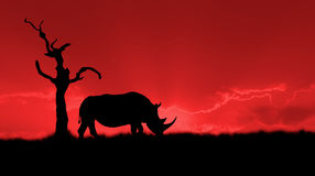 African rhinoceros silhouette Stock Photography