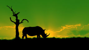 African rhinoceros silhouette green Royalty Free Stock Photo