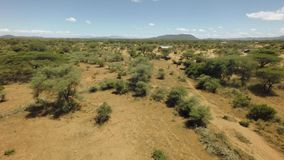 African rift valley savannah bush landscape in dry season on hot sunny windy day stock video