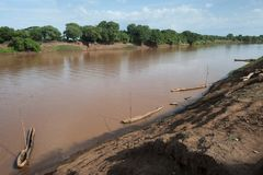 The African river Omo: brown water flows calmly along the channel among the flat banks with green lush trees, at the near edge of. African river Omo: brown water Stock Photography