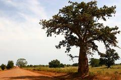 African road. Baobab tree near al dusty african road Royalty Free Stock Image