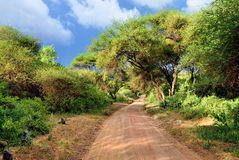 African road Royalty Free Stock Image