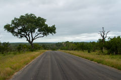 African road in savanna, South Africa Stock Photos