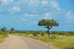African road in savanna, South Africa Stock Photography