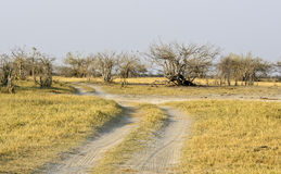 African road Stock Photography